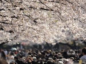PLANET TOKYO: DISCOVER JAPAN'S CAPITAL Photos