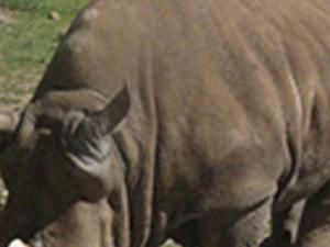 Safari-zoo Photos