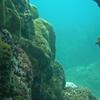 Scuba diving in Cham island Hoi An