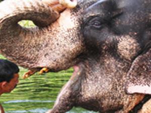 Sri Lanka Explore the historical heart of Kandy hill top Photos