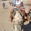 Star Gazing, Camel ride and Bedouin dinner from sharm el sheikh