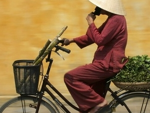 THE BEST OF VIETNAM Photos