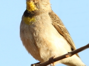 The Grand Tour to admire Abyssinia endemic birds Photos