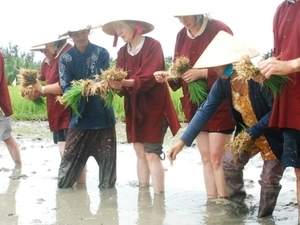 The Rice Paddy Experience Photos