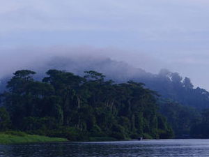 Tortuguero National Park Photos