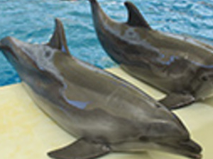 Troy Waterpark & Dolphin Show Photos