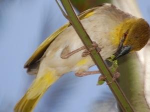 Two days birding in Ethiopia Photos