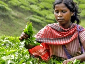 Valvet Tea Garden  | The land of two leaves and a bud
