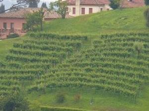 Veneto Small-Group Wine Tasting Tour Photos