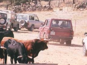 Visit to Wild Bullfight Ranches in 4 X 4  (Sub vehicles)