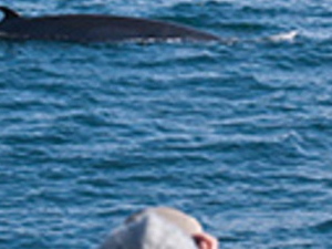 Winter Whale Watching Tour Photos