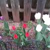 Friendly outdoor family in Oakville