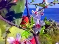 Villa Rosa & the beautiful garden