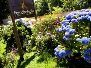 Paradise Pucon International Hostal