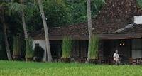D Omah Hotel Yogya