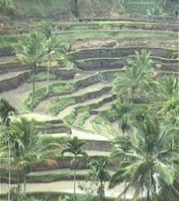 Melia Bali The Garden Villas