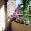 Luxury Residence In Paradise