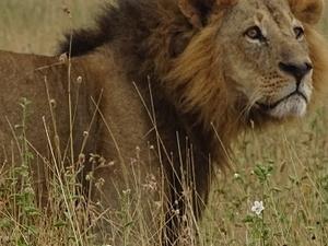 Nairobi National Park Tour Photos
