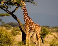 Kenya Adventure & Beach Holiday