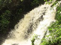 Taste of Uganda Primates, Culture and Wildlife