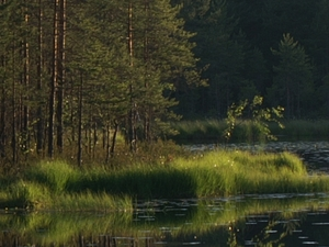 Nuuksio National Park: Day & Night with Nature Photos