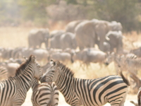 Migration Safari February 2017