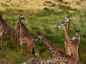 Full-Day Private Tour of Arusha National Park Photos