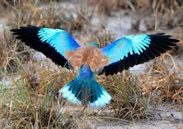 Exclusive Bird Watching Safari Photos