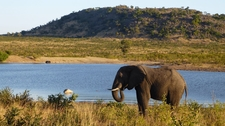 Elephant Close To The Water