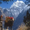 Nepal Hiking Adventure