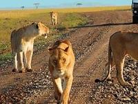 Family Tour in Kenya