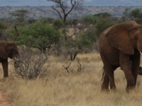 Tembea Kenya Safari