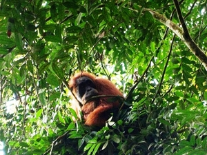 Orangutan and Tiger Tour Packages