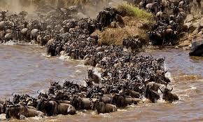 Masai Mara - Lake Nakuru - Amboseli - Ngorongoro - Serengeti Photos