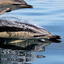 Dolphin Tours