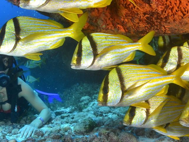 Cozumel Scuba Diving Photos