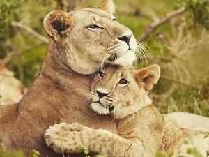 Kenya Tanzania Safari Photos