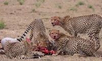 Lenchada Safaris