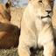 10 Days Epic Gorilla And Wildlife Safari