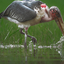 15 Days Bird Watching Safari