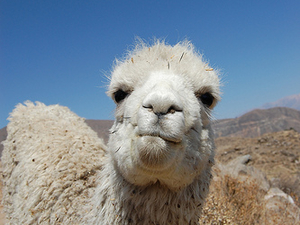 Colca One Day Tour Photos