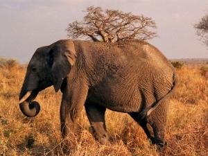 Wildlife Safari in Tanzania Fotos