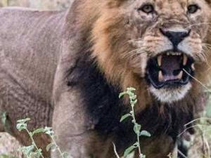 Wildlife Safari Package