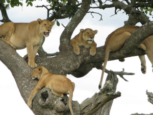 Tarangire, Ngorongoro Crater and Lake Manyara Photos