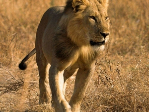 10 Nights/11Days Road Safari Package in Kenya