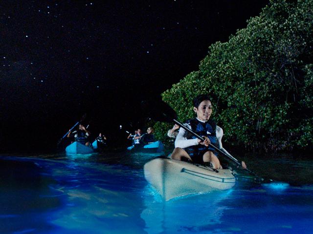 Bioluminescent Kayaking Tour Photos