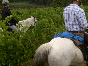 Exclusive Horseback Winelands Tour