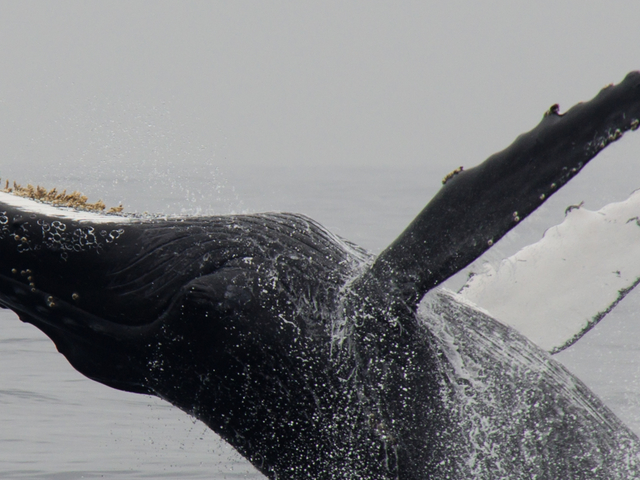 Private Whale Watching Tour in Cabo San Lucas Photos