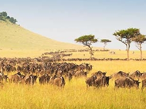 Tanzania Wildlife Safaris Photos