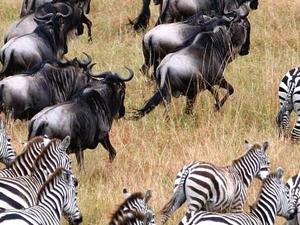 Classic Tour Tanzania